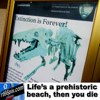 Life's a prehistoric beach, then you die