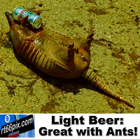 Light Beer Great With Ants!