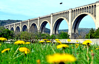 VIADUCT, DANDELIONS & INSECT (Nicholson PA)