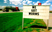 WE GOT WORMS (US 75 NE)